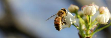 Biodiversity in the urban realm
